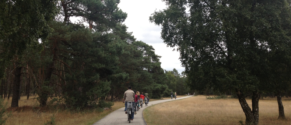 Cycling through Hoge Veluwe National Park to the Kröller-Müller Museum